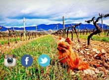 Redes Sociales PampitaWine
